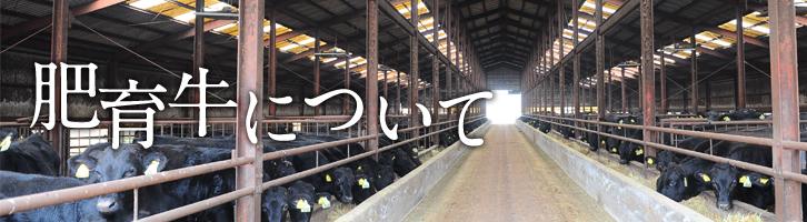 敷地・肥育牛
